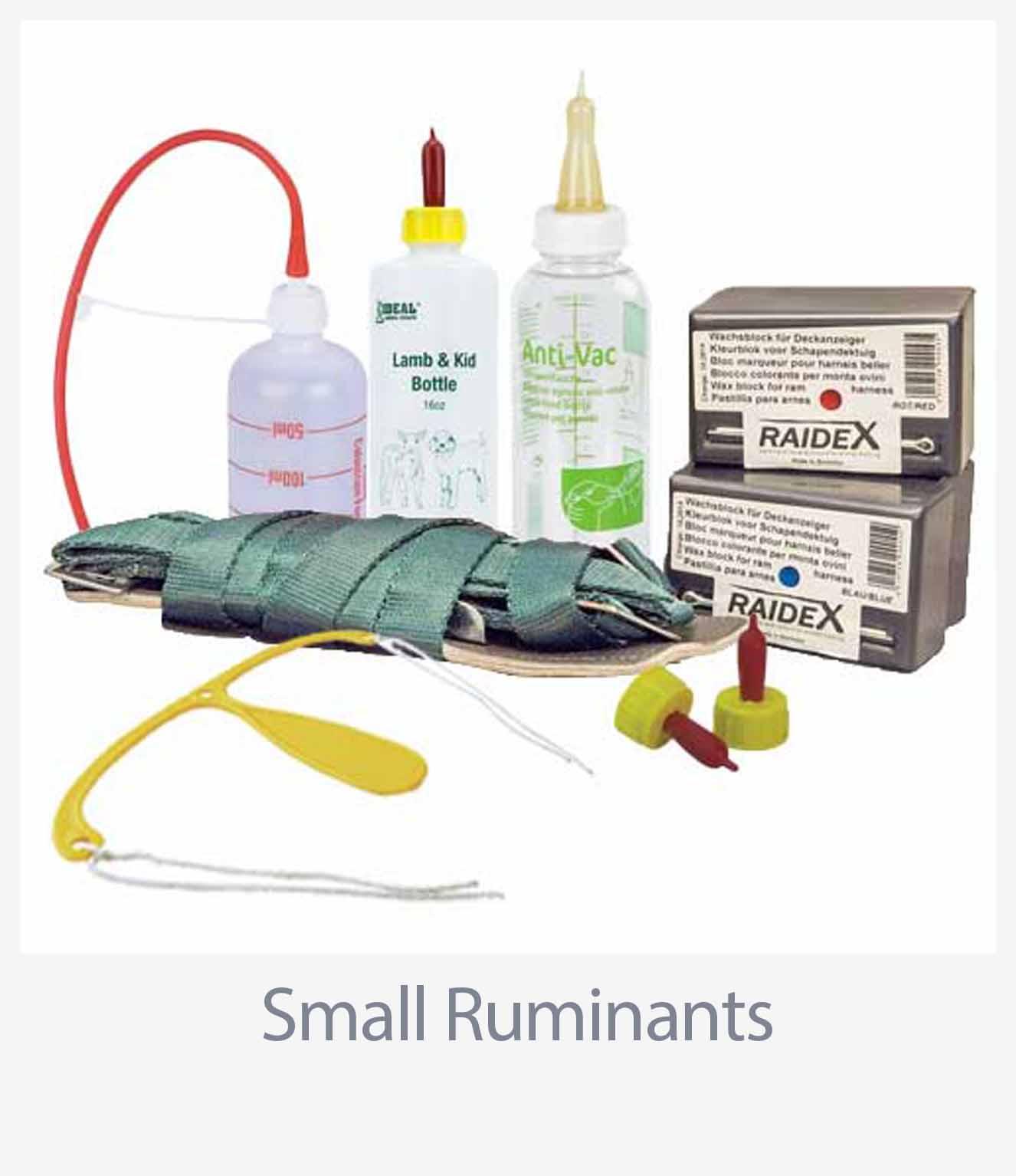 Small Ruminants